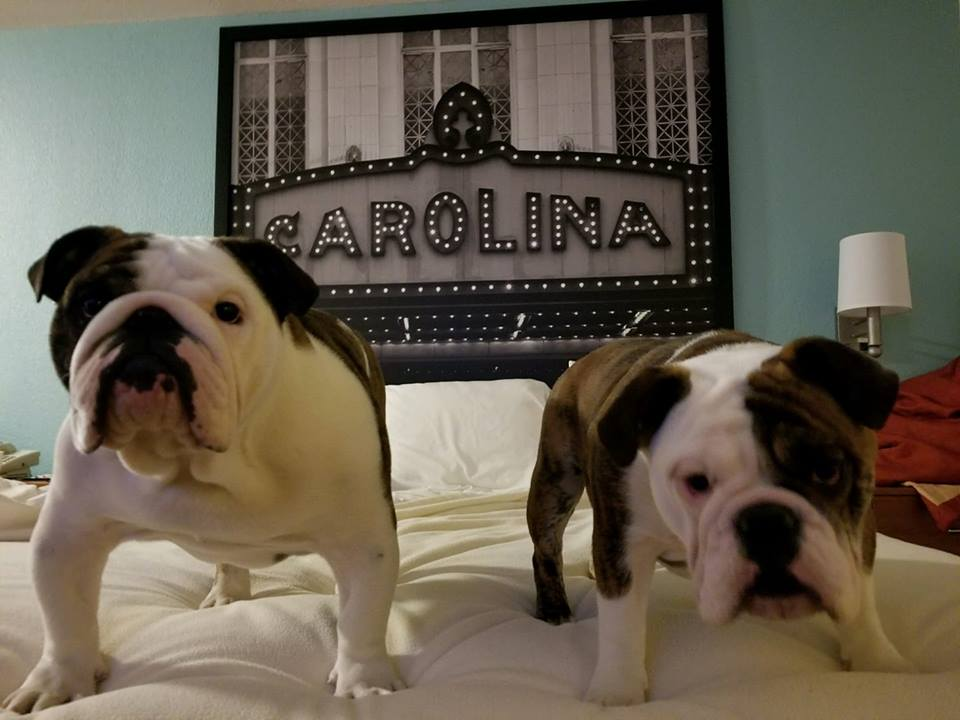 Homegrown Country Bulldogs Homegrown Country Bulldogs